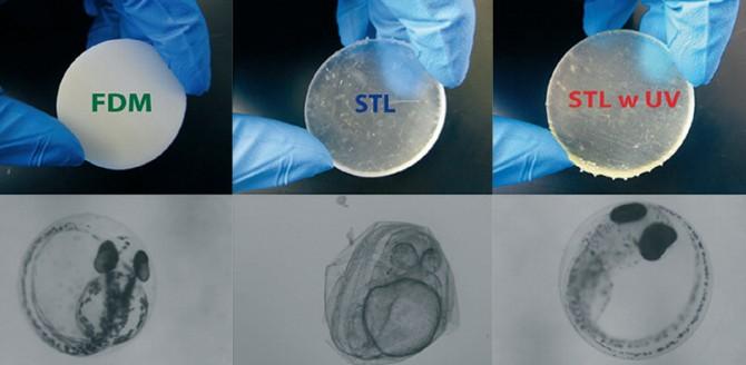 FDM, SLA(그림 표시 STL), SLA 프린팅 후 자외선 후가공 등 세가지 방식으로 찍은 물체에 제브라피시 배아를 노출시킨 결과. SLA 프린터로 찍은 물체에 노출된 배아가 발달이 늦고 돌연변이 비율이 높았다. 소수가 부화했지만, 100% 기형이었다. - Environmental Science & Technology 제공